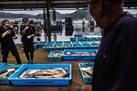 Fish ready to be sold at the whole sale fish market, Miyako port