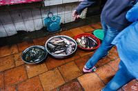 Fish at the market, Phnom Penh