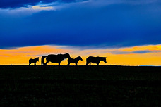Landscape in Mongolia at dawn.