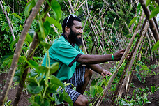 A farmer at the Kava intercropping system project in Vanuatu.
